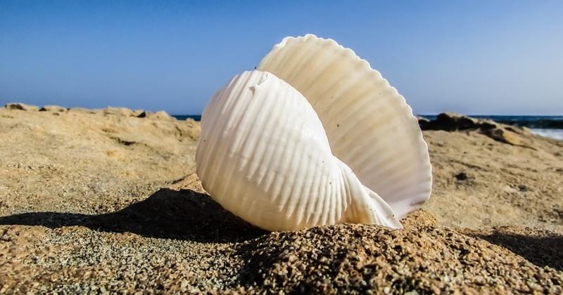 shell.jpeg